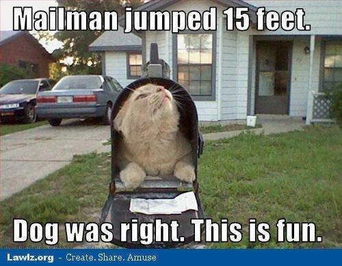 Name:  Cat mailbox.jpg Views: 670 Size:  51.9 KB