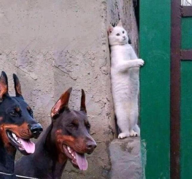 Name:  cat.jpg Views: 300 Size:  47.5 KB