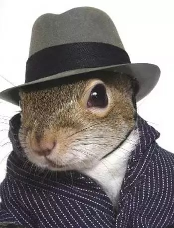 Name:  squirrelavatar.jpg