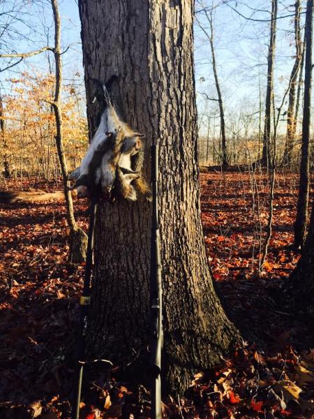 Name:  squirrel element 2 2.jpg Views: 928 Size:  78.5 KB