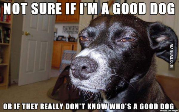 Name:  good_dog.jpg Views: 35046 Size:  46.1 KB